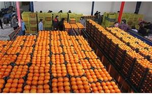 مذاکره بخش خصوصی با اصناف برای ذخیرهسازی محصولات کشاورزی درشب عید