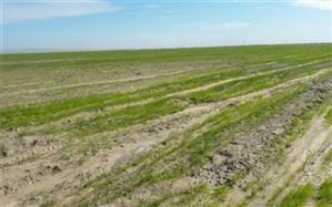 ۵٠ درصد اراضی زراعی خاش به کشت پاییزه اختصاص یافت