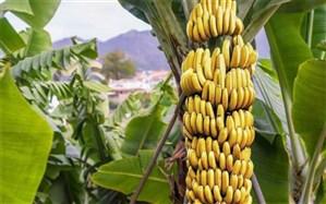 نگارش دو سند تحول در صنعت کشاورزی و دامپروری سیستان و بلوچستان پایان یافت