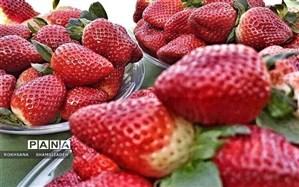 برداشت ۱۰۰ تنی توت فرنگی از مزرعه ای در روستای درونک امیدیه