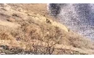 مهار آتش سوزی در منطقه کوهستانی کلیبر