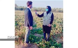 خسارت 150 میلیارد تومانی سرما به کشاورزان عنبرآبادی