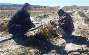 خسارت ٢٨١ میلیارد ریالی یخبندان شبانه به کشاورزان سرباز