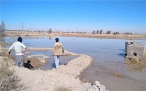 آبیاری بیش از 56 هزار هکتار از اراضی دشت سیستان