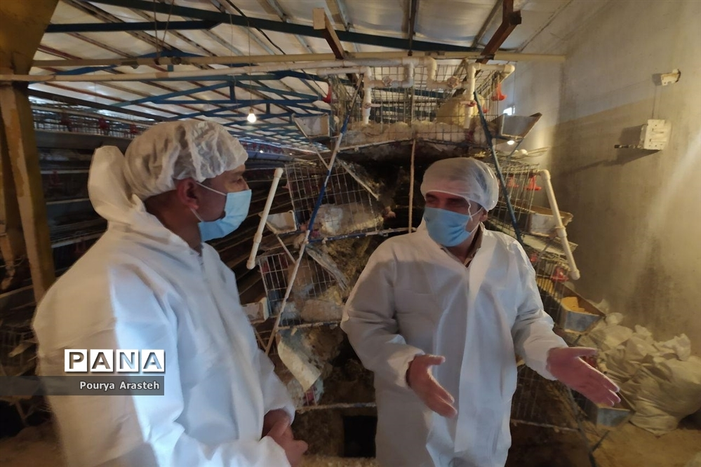 بازدید از عملیات معدوم سازی مرغداری درگیر با بیماری  آنفولانزا درشهرستان خوسف استان خراسان جنوبی
