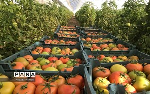 هشدارهای هواشناسی به کشاورزان و دامداران؛ کمبارشی تا پایان اسفند ادامه دارد