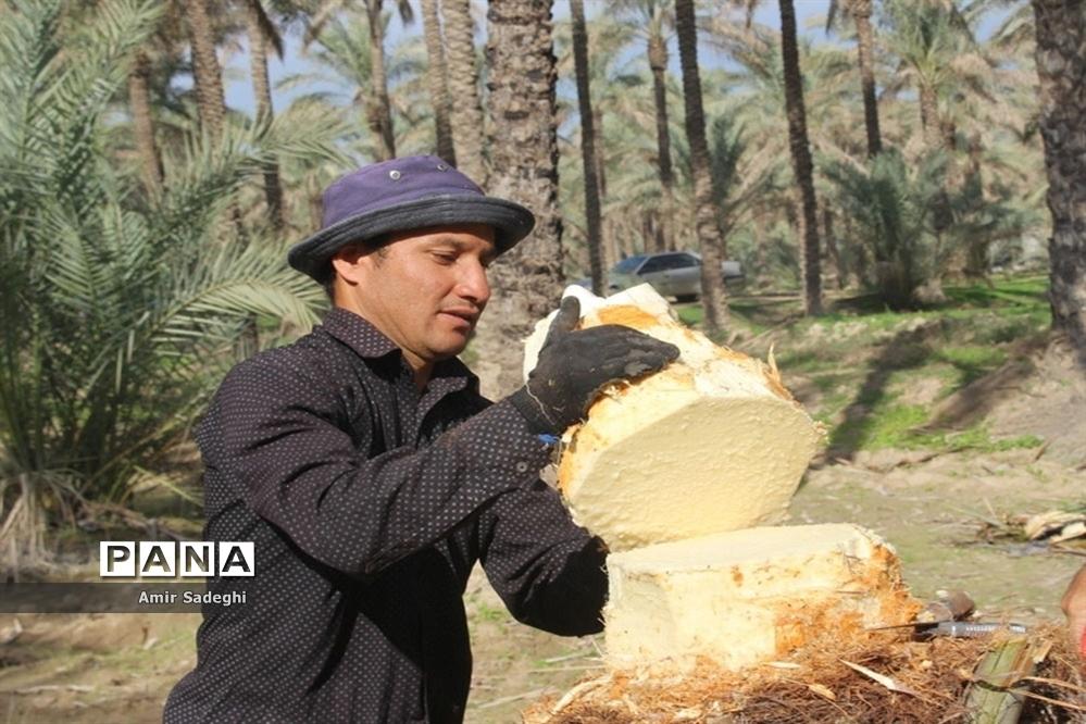 در آوردن پنیر نخل یا پنیر درخت خرما