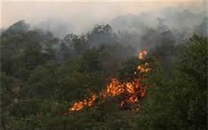 زمینهای حفاظت شده جنگلی شادول ماسوله طعمه حریق شد