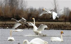 پرندگان مهاجر سوژه ای برای کمدین های شمال کشور