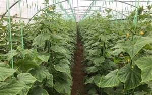 سرمایهگذاری ۵۰۰ میلیارد ریالی بخش خصوصی در کشاورزی خاش