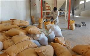 تولید ٢٢٠٠ تن کنسانتره دامی در سیستان و بلوچستان