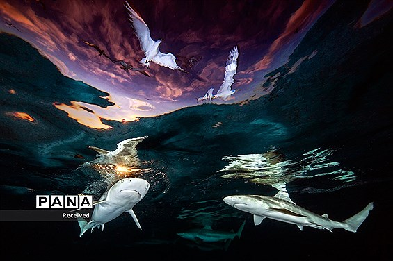 منتخب عکسهای برندگان مسابقه عکاسی زیر آب در سال 2021