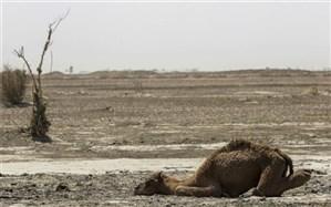 سیستان و بلوچستان تنها استان بدون بارش کشور شد