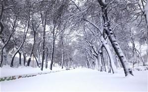 بارش شدید برف و باران در برخی مناطق