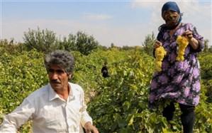 تکلیف دولت برای اجرای طرح ملی حدنگار طی دو سال با مشارکت کشاورزان