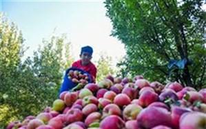 افزایش ۲برابری صادرات سیب مراغه به خارج از کشور