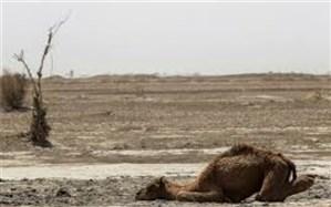 اقلیم سیستان و بلوچستان از خشک به فراخشک تبدیل شده است