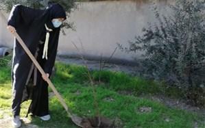 کاشت نهال سبز در آموزش و پرورش ناحیه دو شهر ری