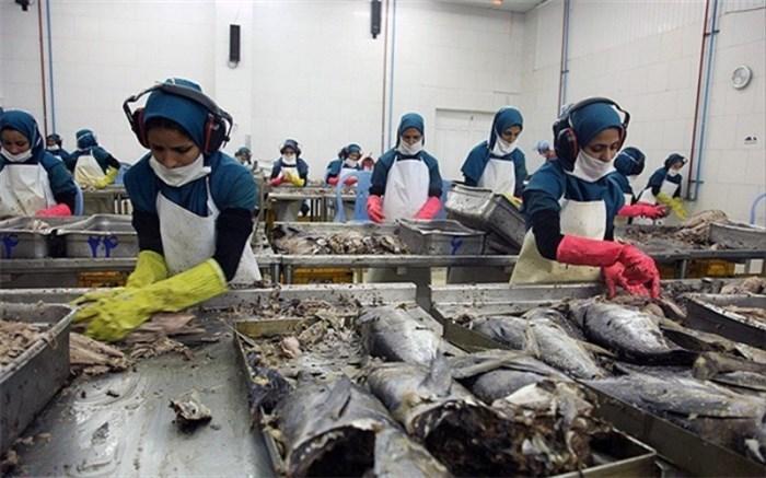 🎬سیستان و بلوچستان قطب تولید کنسرو تن ماهیان در کشور