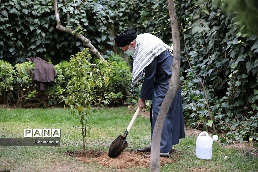 کاشت دو نهال میوه در روز درختکاری توسط رهبر انقلاب