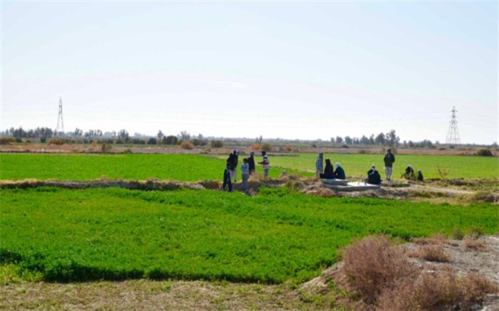 بیش از 68 هزار هکتار اراضی دشت سیستان زیر کشت رفت