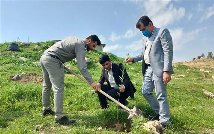 آغاز کاشت 2000 نهال در سطح منابع طبیعی شهرستان لالی
