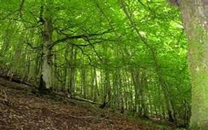 آغاز بهکار سامانه پایش هوایی جنگلهای هیرکانی در مازندران
