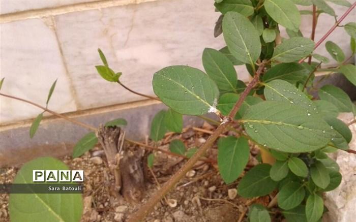 روز درختکاری در منطقه 18 شهر تهران