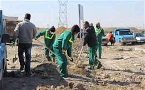 مراسم کاشت نهالهای اولین باغ زیتون در شهرستان اسلامشهر