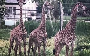 سفر به باغ وحش صفادشت، رویارویی بادنیای جالب حیوانات از فاصله نزدیک