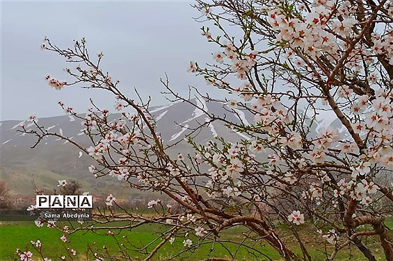 بهار طبیعت