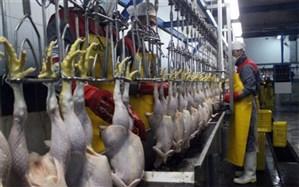 شبکه توزیع مرغ، خلأهایی دارد