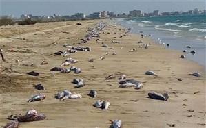 علت مشاهده لاشه گربهماهیها در سواحل هرمزگان مشخص شد
