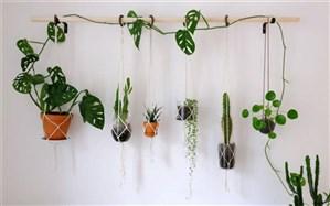 نکات مهم مراقبت از گیاه آویز
