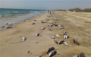 ماجرای 15 تُن لاشه گربهماهی که به سواحل جاسک رسید
