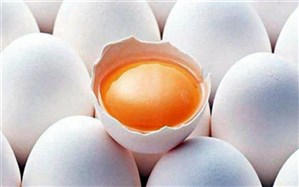 درباره زرده تخم مرغ بیشتر بدانید