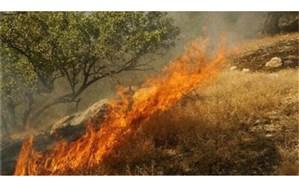 شعله و رشدن  آتش سوزی جنگل ها در منطقه حفاظت شده کوه خامی گچساران