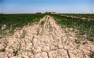 ۷۰ درصد ازمزارع کشاورزی کهگیلویه قابلیت برداشت ندارند