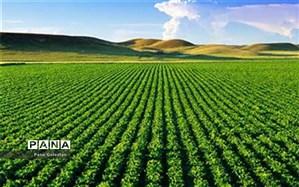 81 هزار میلیارد طرح ملی کشاورزی افتتاح می شود