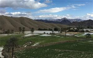 برداشت بیش از 700 تن محصولات کشاورزی از منطقه کیشکور سیستان و بلوچستان