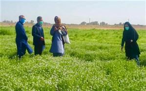 ۶۲ هکتار از مزارع هیرمند به کشت گیاهان دارویی اختصاص یافت