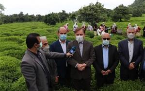 رقابتپذیری صنعت چای ایرانی با اقدامات حمایتی دولت افزایش یابد