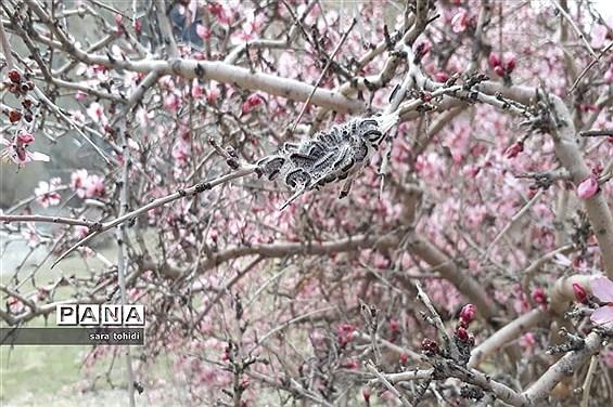 طبیعت زیبای فریدونشهر در استاناصفهان
