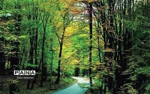 پوشش گیاهی جنگل های گلستان نابود شد