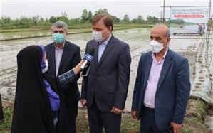 استاندار: کشاورزان برای انجام نشاءبرنج، مطابق با تقویم زراعی  عمل کنند