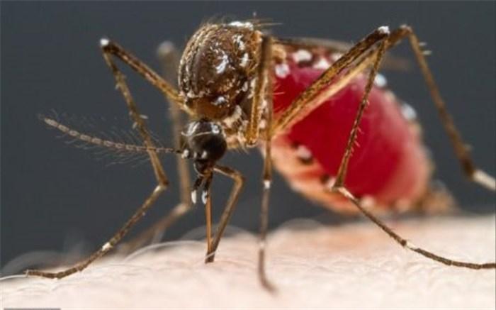 خون انسان برای پشهها چه طعمی دارد؟