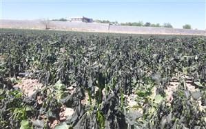 خسارت  سرمازدگی 488 میلیارد تومانی به محصولات کشاورزی در شیراز
