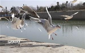 دریاچه شهدای خلیج فارس میزبان 114 گونه از پرندگان