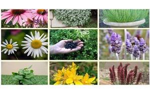 خط تولید گیاهان دارویی در اردبیل تقویت میشود
