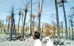 ۷هکتار از نخلستانهای نیکشهر طعمه آتش شد